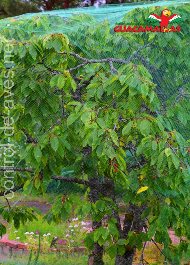 árbol frutal protegido con malla GUACAMALLAS