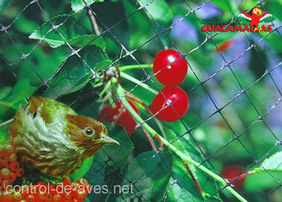 La malla anti-aves GUACAMALLAS, ademas de proteger tus cultivos también es amable con los animales