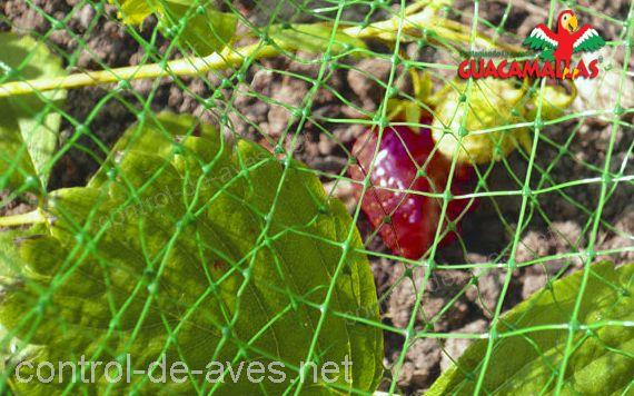 GUACAMALLAS, protege tus cultivos, ademas es sencillo de instalar.